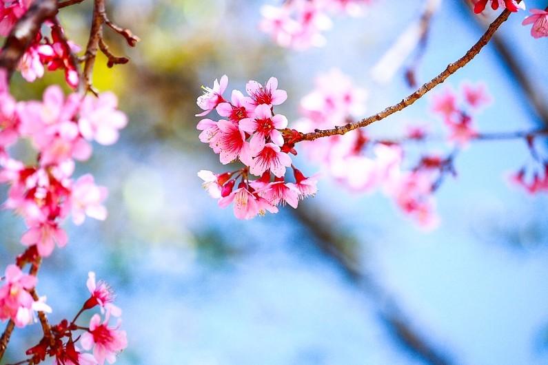 avril-le-printemps-est-la